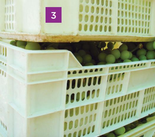 15 puntos para una mejor postcosecha y cadena de frío de uva de mesa en momentos de crisis