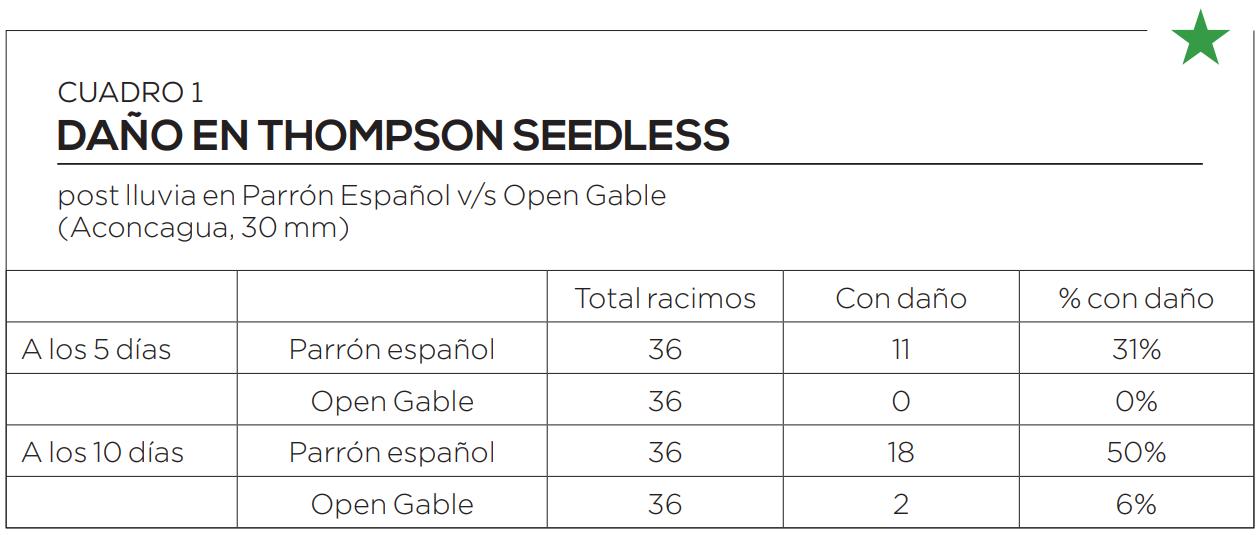 Uva de mesa: ventajas del sistema Open Gable frente al tradicional parrón español