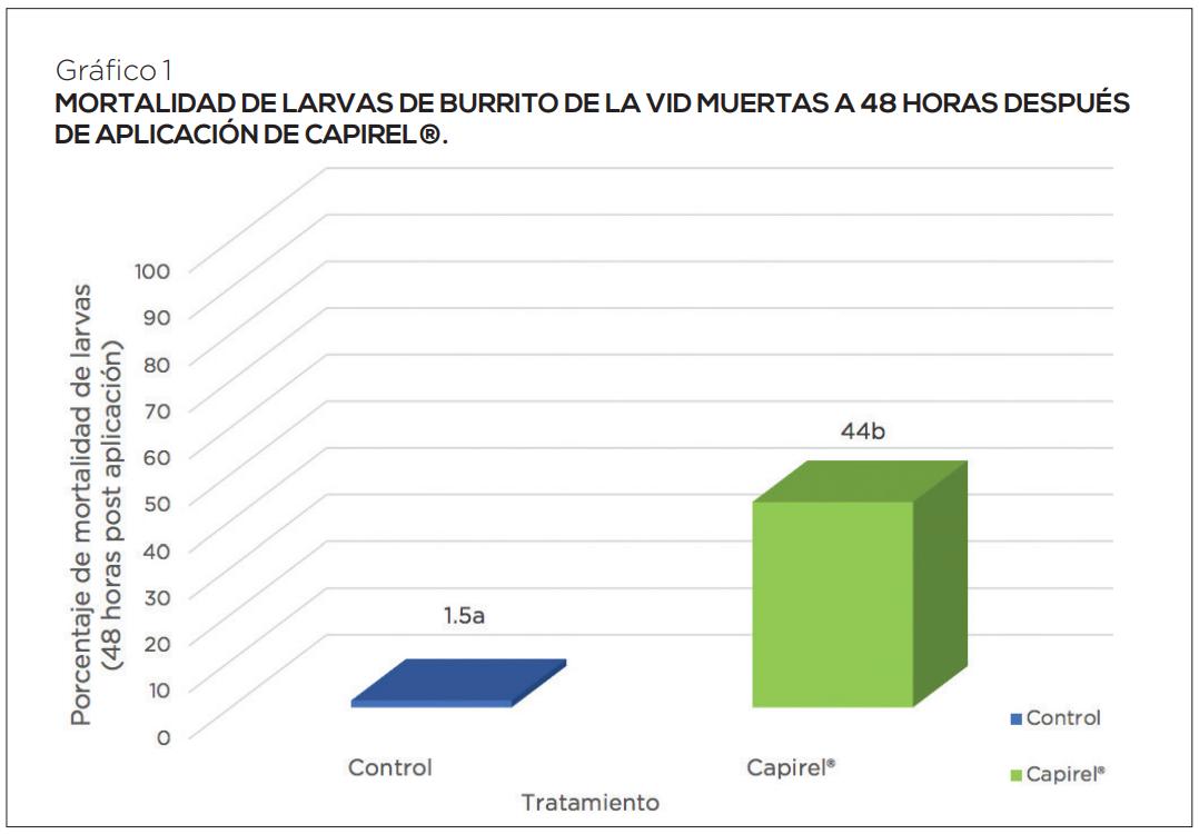 Manejo de curculiónidos en vides: estrategia complementaria con y sin residuos de plaguicidas