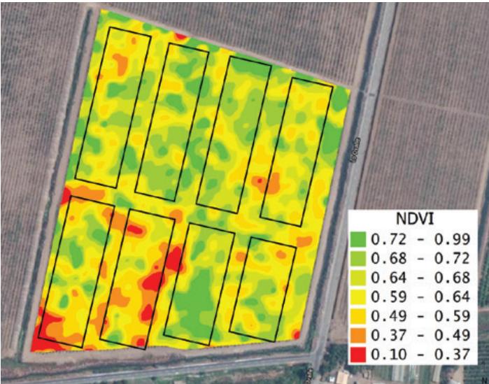 Cómo hacer una mejor experimentación de campo para evaluar productos orgánicos y bioinsumos