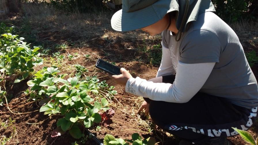 Inteligencia artificial permite detectar con una fotografía enfermedades en cultivos agrícolas