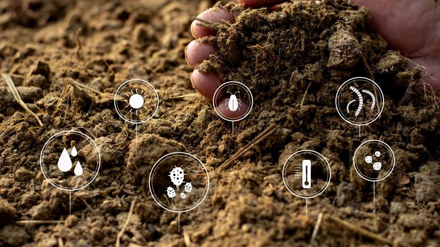 Actividad biológica del suelo: la clave para generar una mejor agricultura