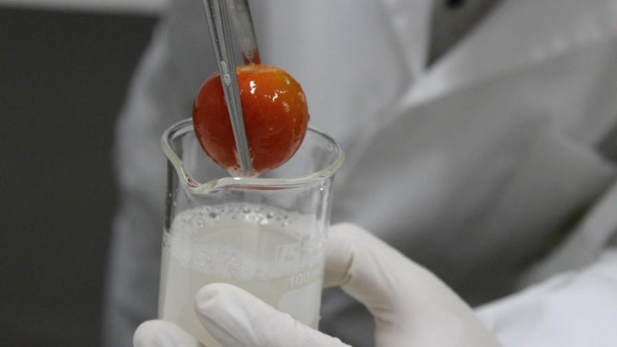 INIA trabaja en prototipo de recubrimiento natural para prolongar vida útil de frutas