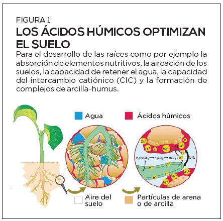 El secreto de los suelos fértiles: qué son los ácidos húmicos y qué beneficios aportan al suelo y las plantas