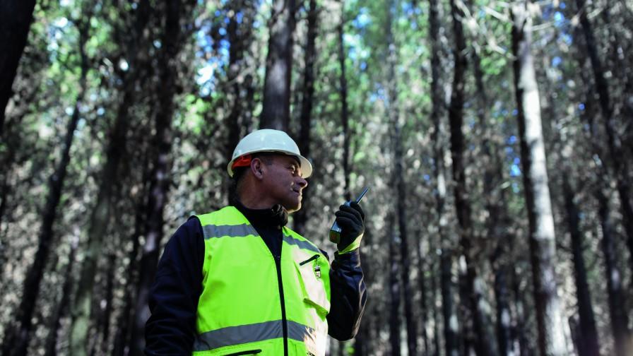 Sector Forestal promueve formación de futuros técnicos en línea con los desafíos de la industria
