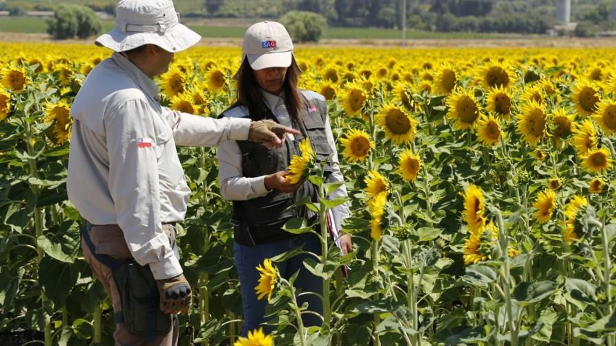 SAG fusiona divisiones Agrícola y Forestal y Semillas para ofrecer procesos más eficientes