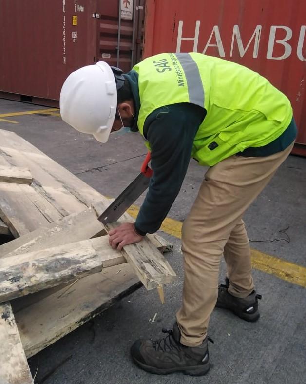 SAG Biobío intercepta plaga cuarentenaria en embalaje de madera proveniente del extranjero