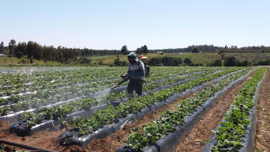 Malas prácticas en el uso de plaguicidas afectan la inocuidad de los alimentos