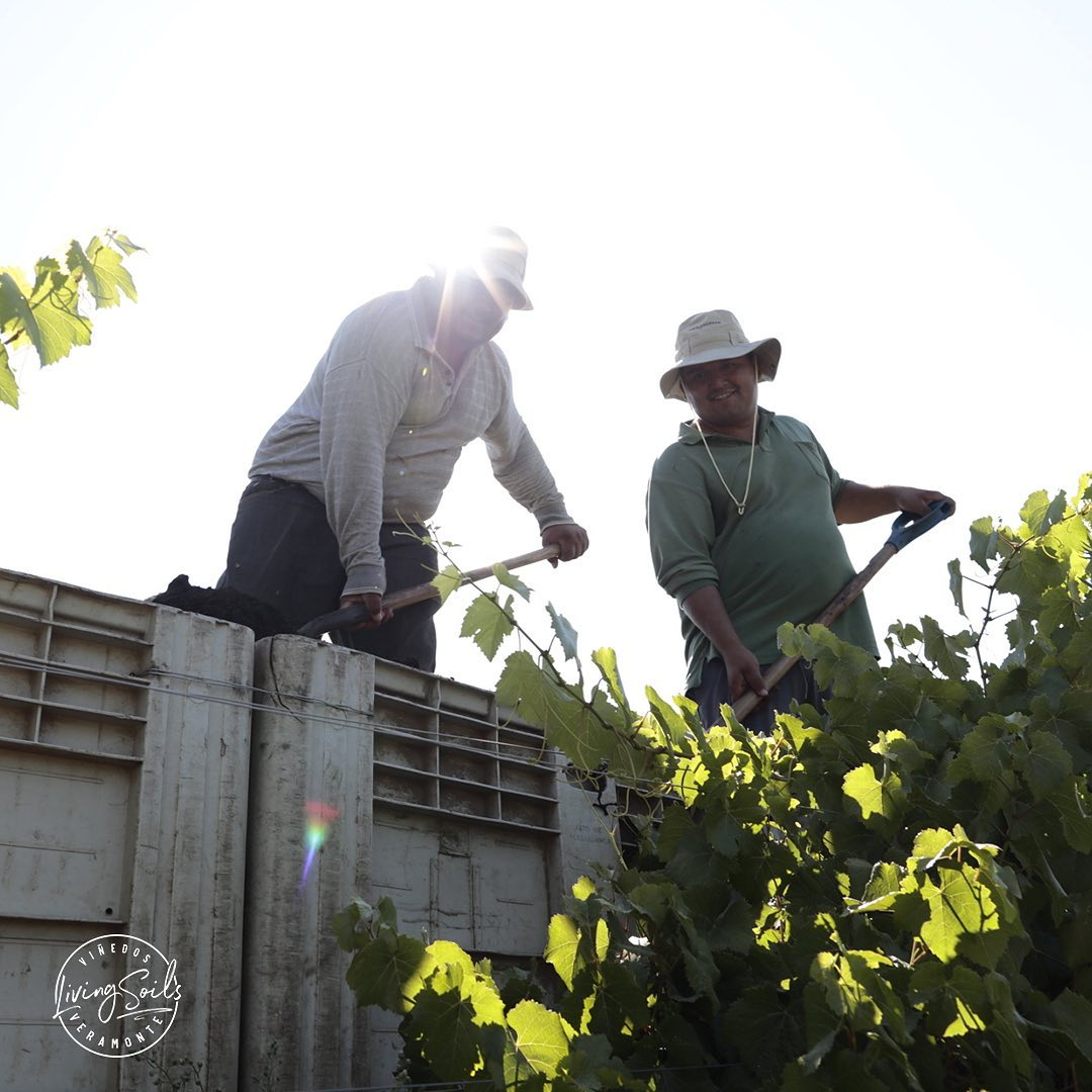 Viñedos Veramonte obtiene certificado de enoturismo sustentable
