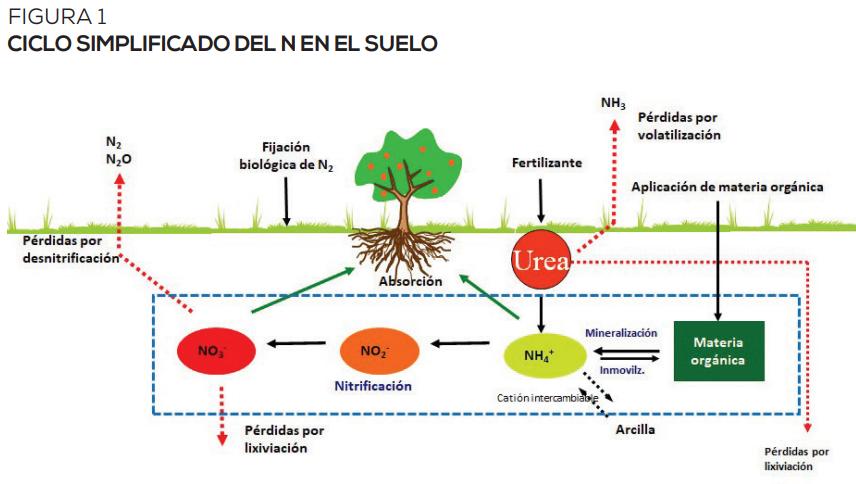 Claves para un mejor suministro en el suelo y manejo eficiente del N en cultivos y frutales