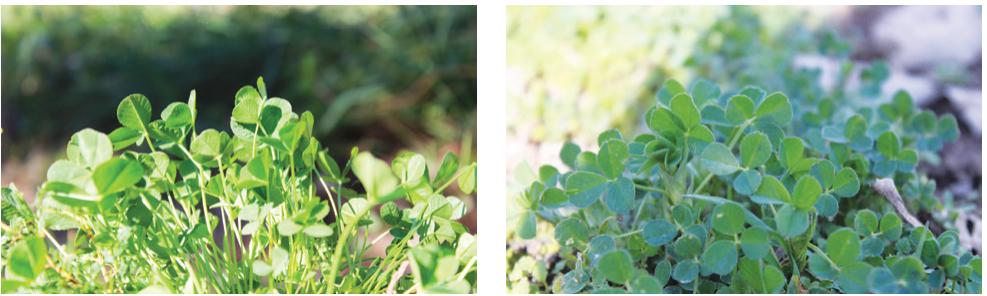 Cubiertas vegetales: una herramienta para proteger y reconstruir la fertilidad del suelo