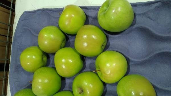 Principales daños y defectos registrados en manzanas durante la temporada 2021