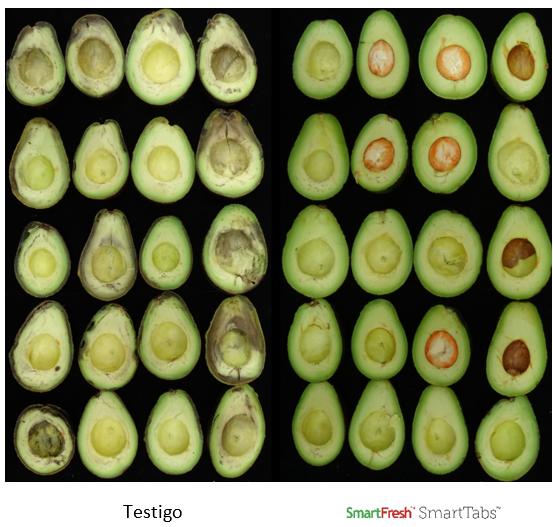 Paltas para mercados distantes, SmartFresh ayuda a llegar hasta los consumidores finales con fruta de máxima calidad