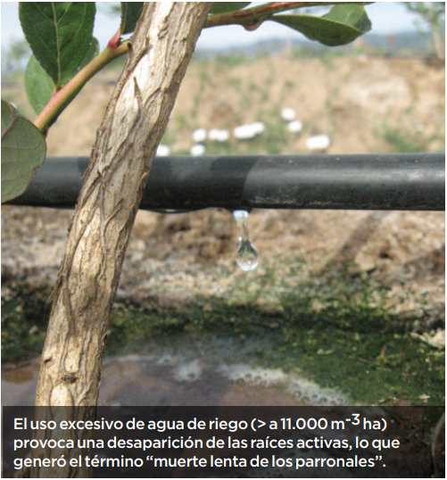 El riego sustentable y funcional evita destruir el sistema radical y potencial productivo