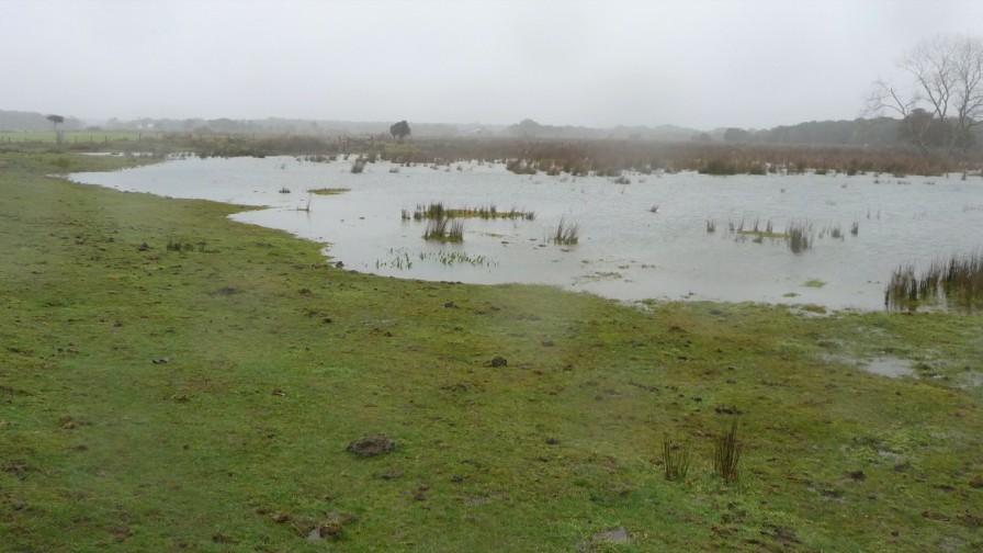 Cuidados de la pradera en tiempos lluviosos