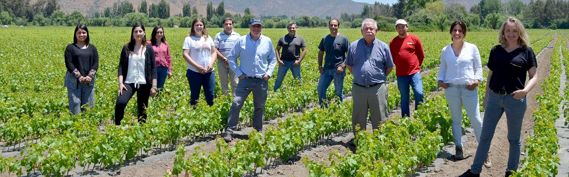 Viveros Nueva Vid apuesta por la producción de cerezos y kiwis así como la obtención de nuevas licencias