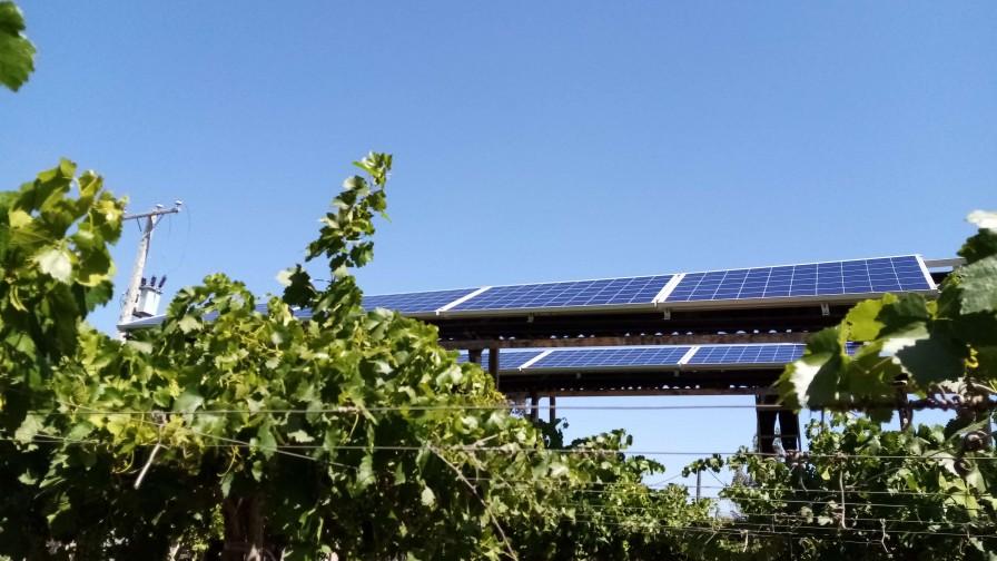 Experiencia de sistema agrivoltaico en uva de mesa var. Red Globe en parrón español