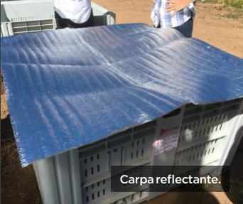 Barreras protectoras ante el efecto de las condiciones ambientales en cosecha de cerezas