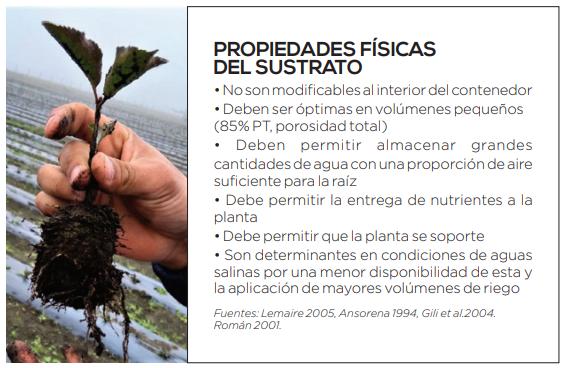 Ventajas y desafíos de la producción de plantas frutales en contenedor