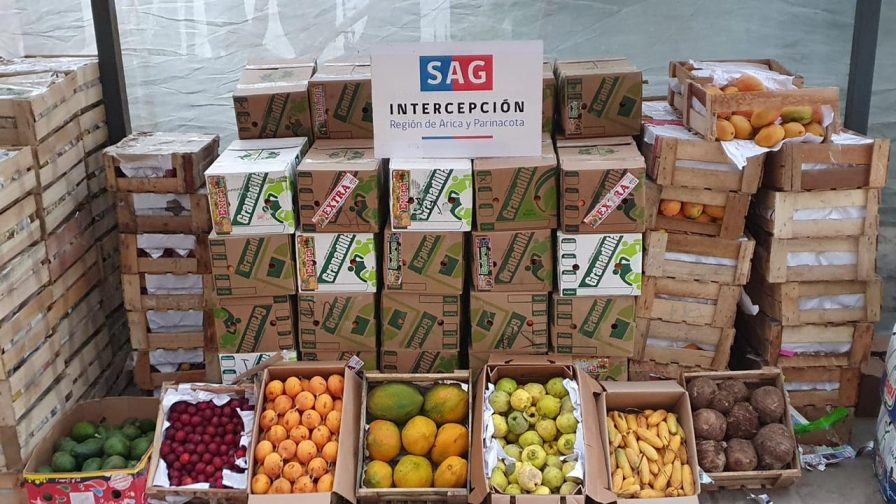SAG detecta mosca de la fruta en productos agrícolas ingresados clandestinamente