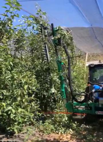 Mecanización: equipos que ofrecen soluciones y eficiencia para huertos de pomáceas
