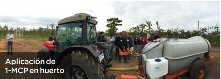 Tecnología en cosecha y postcosecha de manzanas para conservar calidad y condición