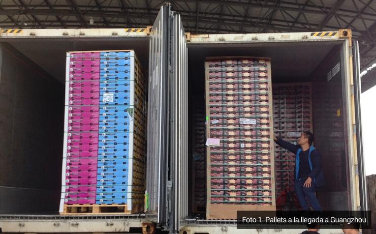 Detalles a considerar en la presentación de envases y embalajes de cerezas de exportación