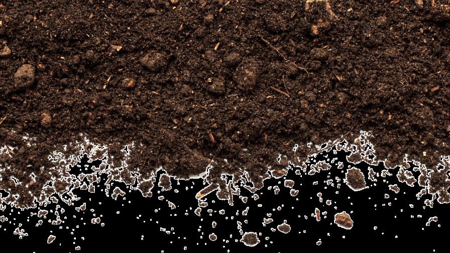 Actividad, abundancia y diversidad de organismos: indicadores de calidad de suelo