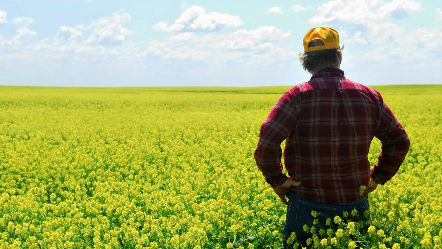 Seis libros educativos para combatir el cambio climático en la producción agricultura