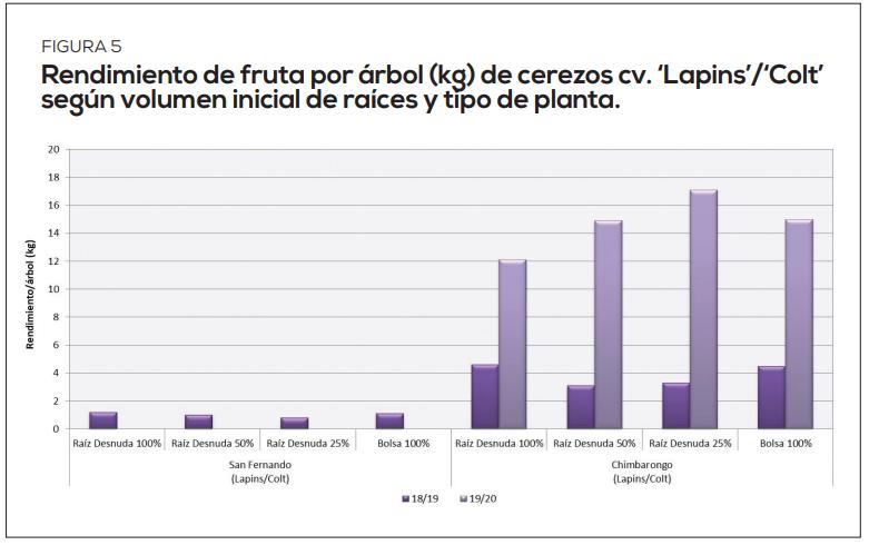 Cerezo: Influencia del volumen de raíces y tipo de planta en su crecimiento y productividad