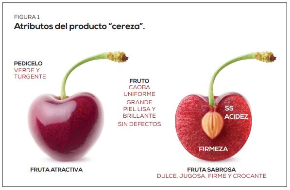 Parámetros a cosecha y su impacto en la vida útil de la cereza