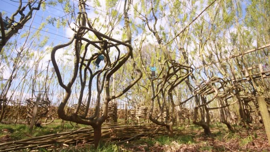 Sillas que se cultivan: el proyecto ecológico que contribuye a liberar oxígeno y absorber CO2